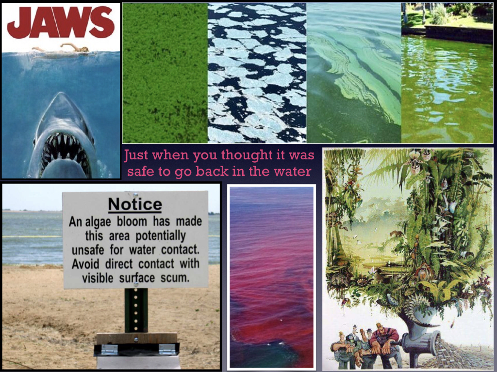 The Blue-Green Algae State